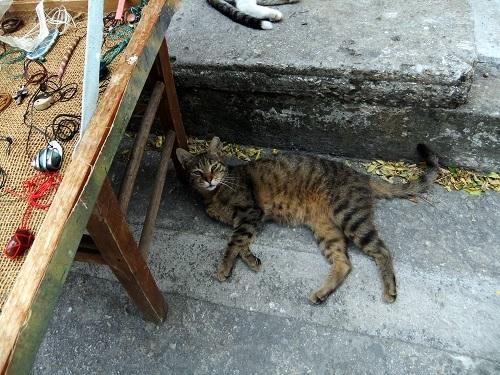 アテネ_脇道にいた猫さん (1)