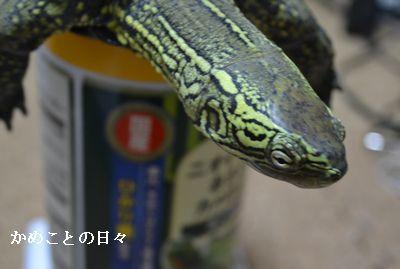 DSC_0361-s.jpg