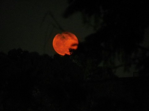 赤い月jpg