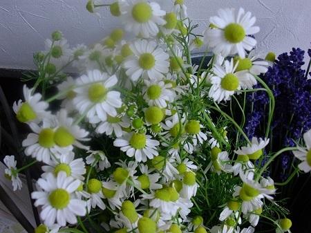 herbthelapy.jpg