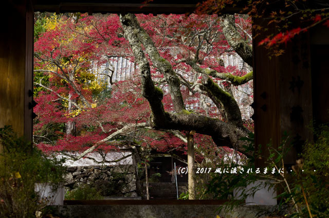 紅葉の情景 京都・亀岡 神藏寺(じんぞうじ) 紅葉8