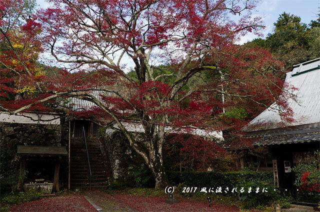 紅葉の情景 京都・亀岡 神藏寺(じんぞうじ) 紅葉2