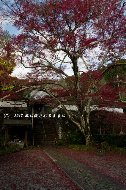 紅葉の情景 京都・亀岡 神藏寺(じんぞうじ) 紅葉3