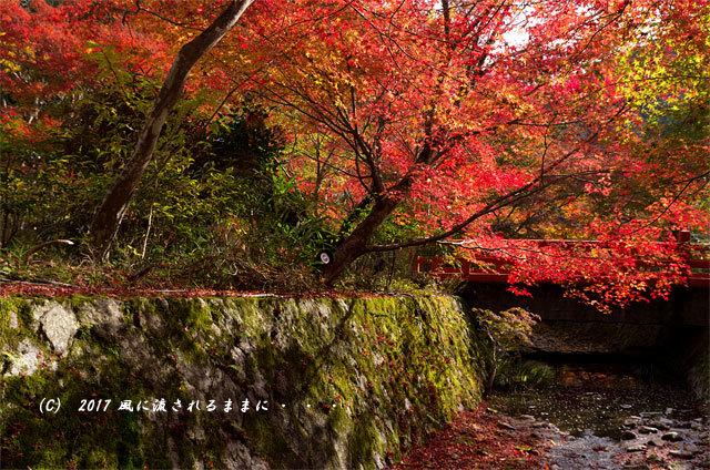 紅葉の情景 京都・亀岡 神藏寺(じんぞうじ) 紅葉4