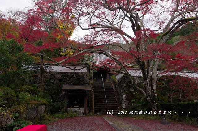 紅葉の情景 京都・亀岡 神藏寺(じんぞうじ) 紅葉6