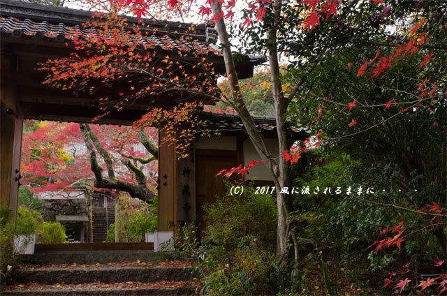 紅葉の情景 京都・亀岡 神藏寺(じんぞうじ) 紅葉9