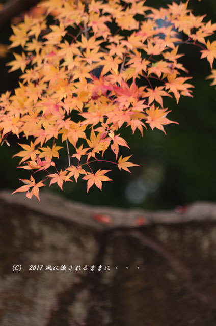 京都・亀岡 苗秀寺(みょうしゅうじ) 紅葉7
