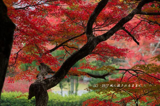京都・亀岡 苗秀寺(みょうしゅうじ) 紅葉8