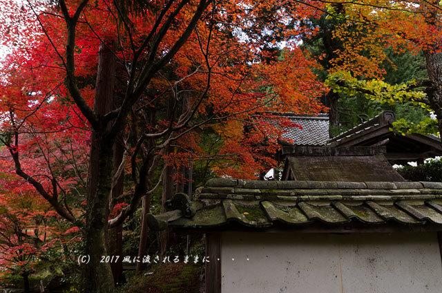 京都・亀岡 苗秀寺(みょうしゅうじ) 紅葉11