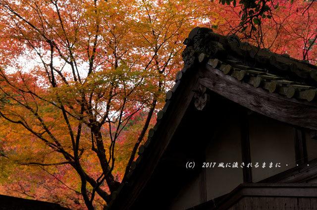 京都・亀岡 苗秀寺(みょうしゅうじ) 紅葉14