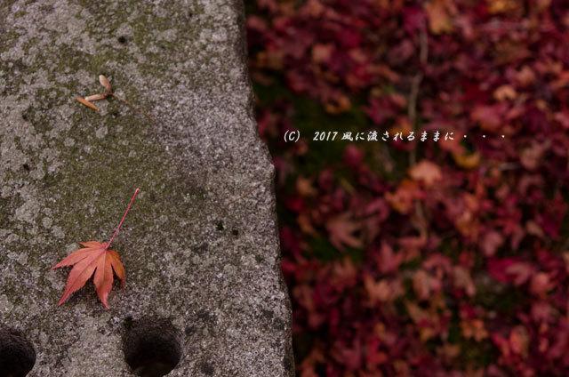 京都・亀岡 苗秀寺(みょうしゅうじ) 紅葉12