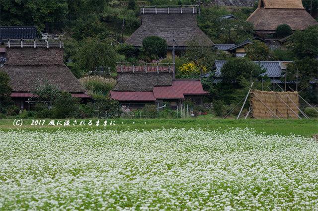 和の情景 京都・美山町 かやぶきの里 蕎麦の花編1