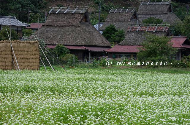 和の情景 京都・美山町 かやぶきの里 蕎麦の花編2