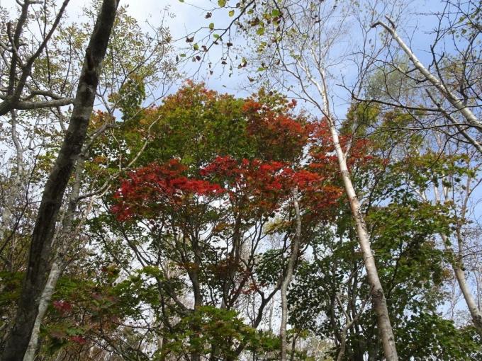 色付く木も