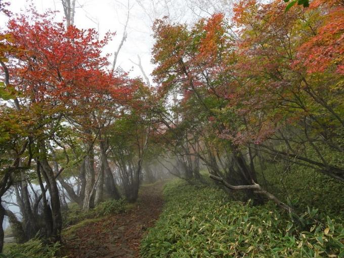 小沼周回路の紅葉