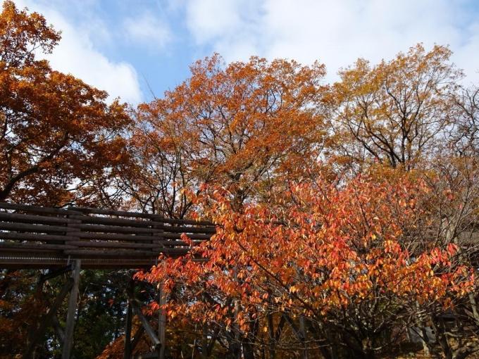 芝の駐車場の紅葉