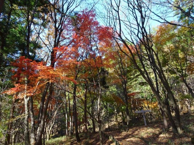登山口付近の紅葉1