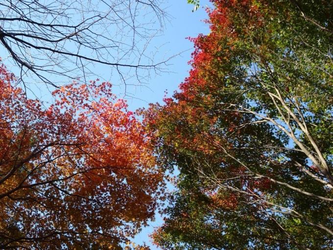 登山口付近の紅葉2