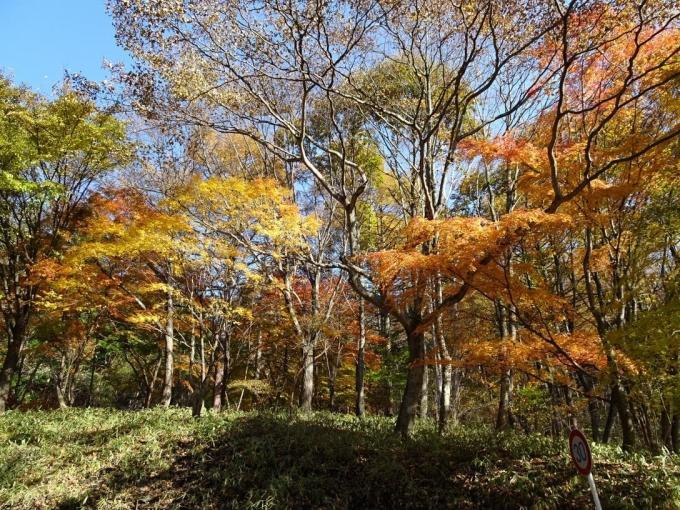 荒山高原登山口付近の紅葉