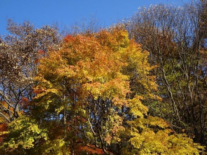 登山口付近の紅葉5