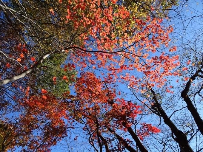 紅葉も鮮やかに