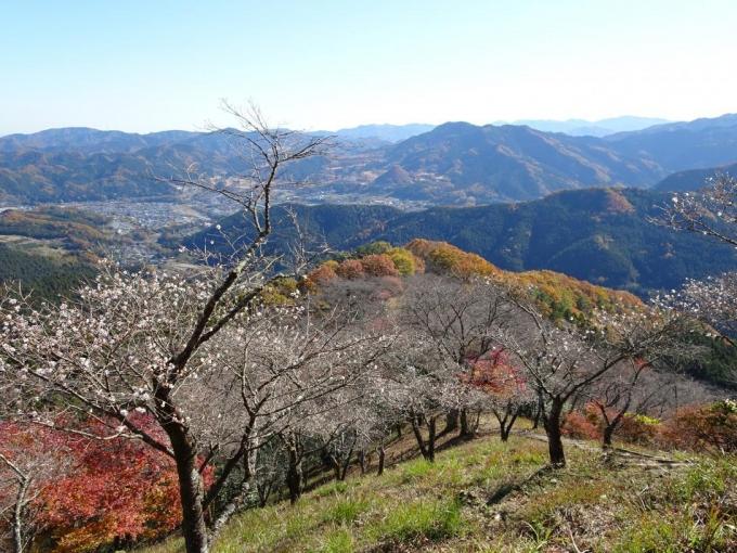 冬桜と城峯公園方向