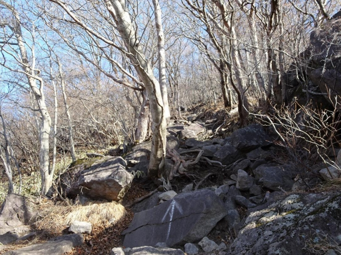 再び岩場の道