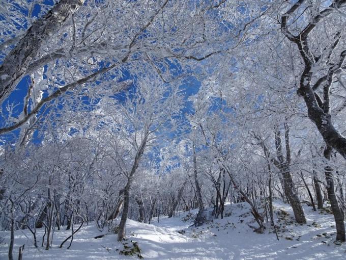 霧氷の森1