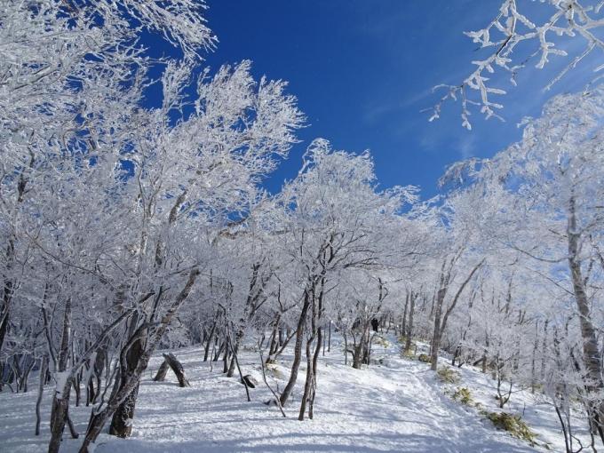 霧氷の森3