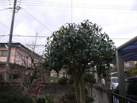 P1670661.jpg