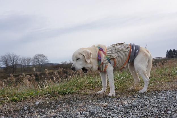 一人の散歩