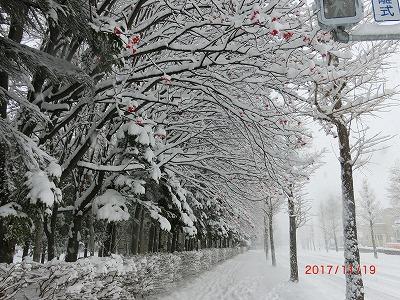 2017111901.jpg