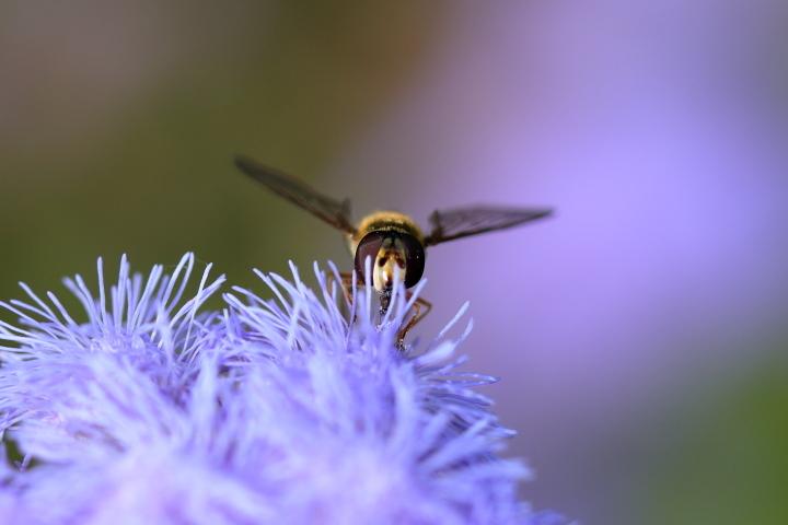 花と昆虫 (1)