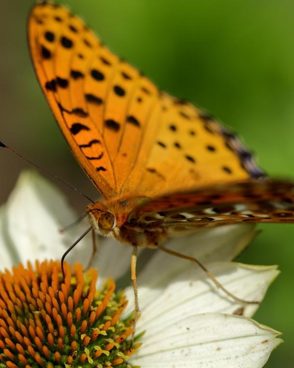 花と昆虫 (2)