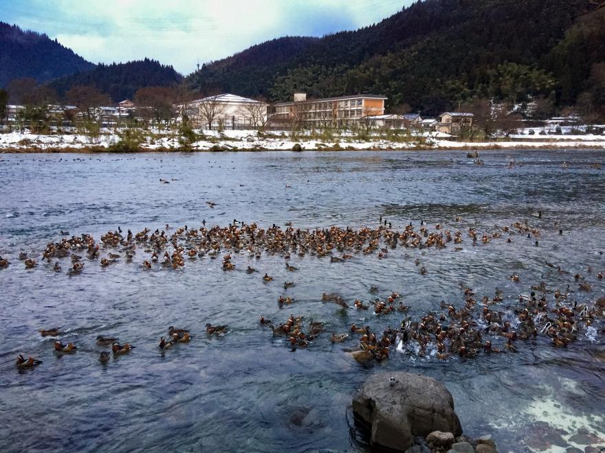 日野川 (1)