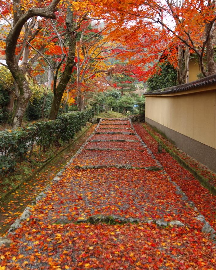 紅葉の絨毯 (1)