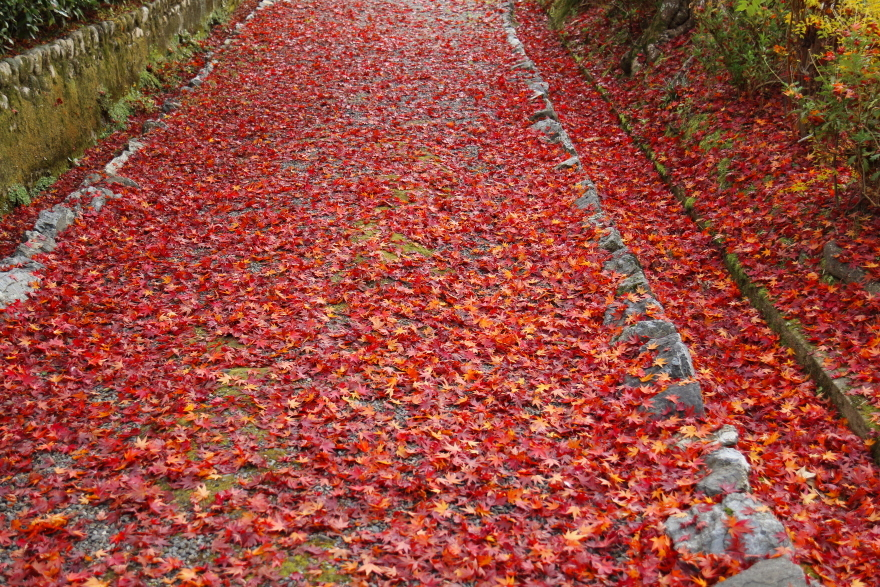 紅葉の絨毯 (2)