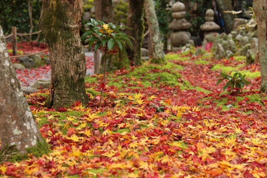 紅葉の絨毯 (3)