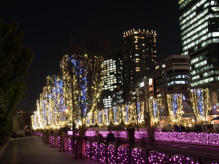 光のケヤキ並木 (1)