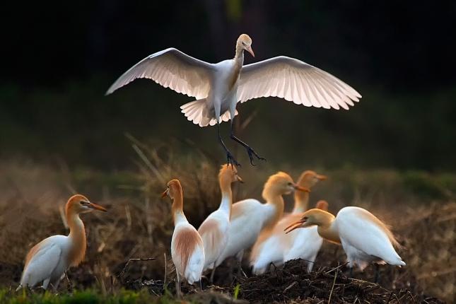 birds-1624418_1280.jpg