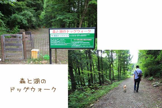 foresthills1.jpg
