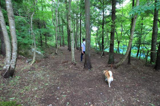 foresthills2.jpg