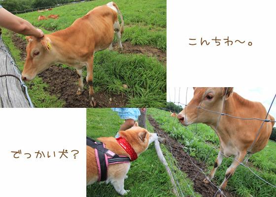 minamigaoka3.jpg