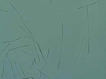 ヌンチャククモタケ(地)b×100
