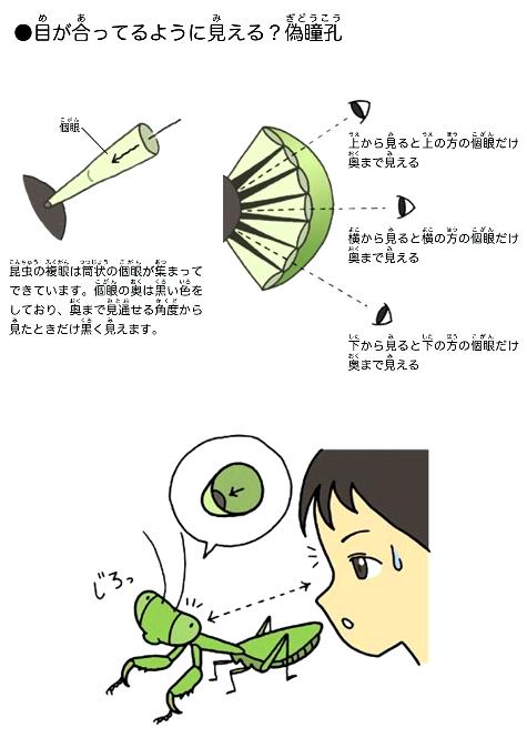 hyogo_no_kamakiri_intro-page7-2.jpg