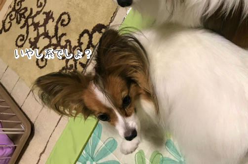 _JMcaaV8残念っ7
