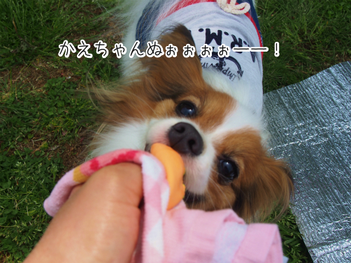nFCbwPVcくろぼく6