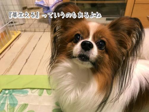 pt8I7sUh草1
