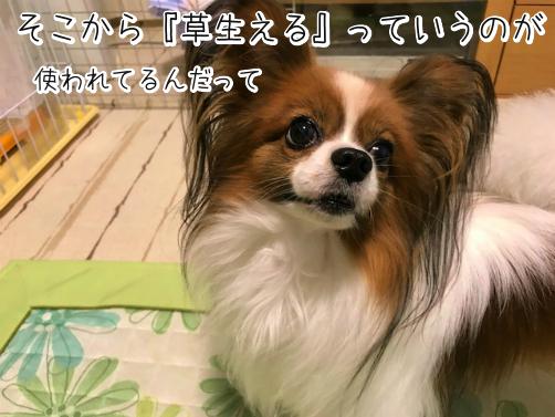 1KpdJYB4草8