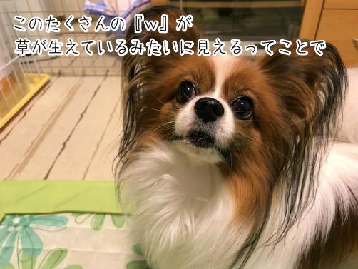 l6rki6mC草7